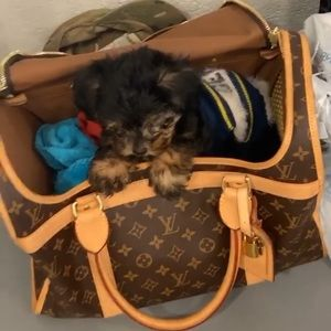 Louis V dog carrier (small dog)